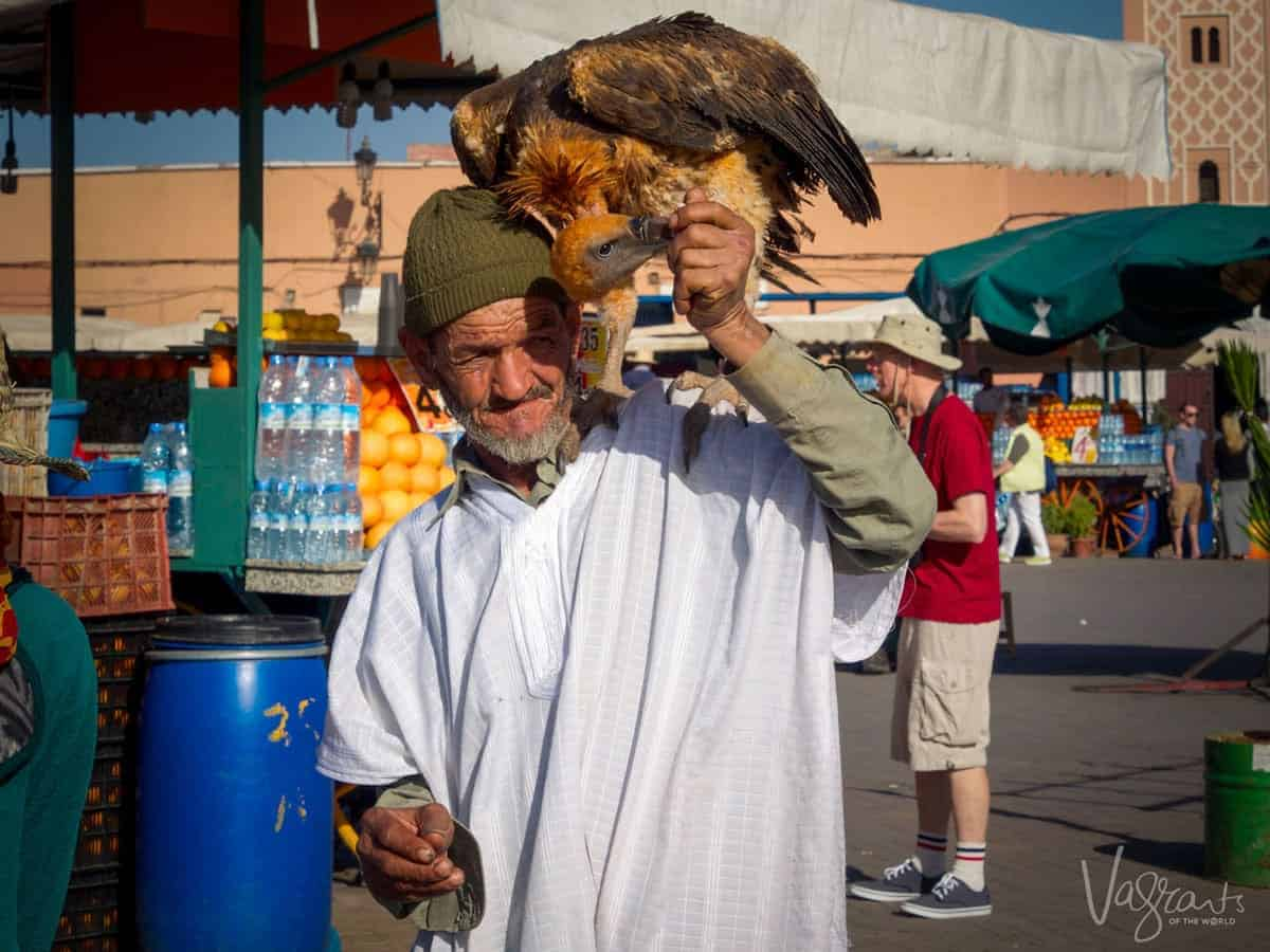 Man with Vulture in Marrakech Morocco Jemaa el-Fnaa. Is Morrocco safe. Beware of pickpockets in Marrakesh Beware of scammers in Marrakesh.