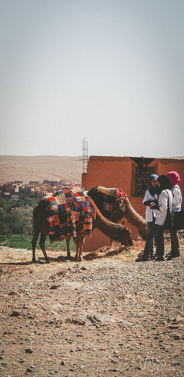 The Atlas Mountains, camel trekking in the Sahara, some incredible stops along the way and we finally made it from Marrakech to Fez.