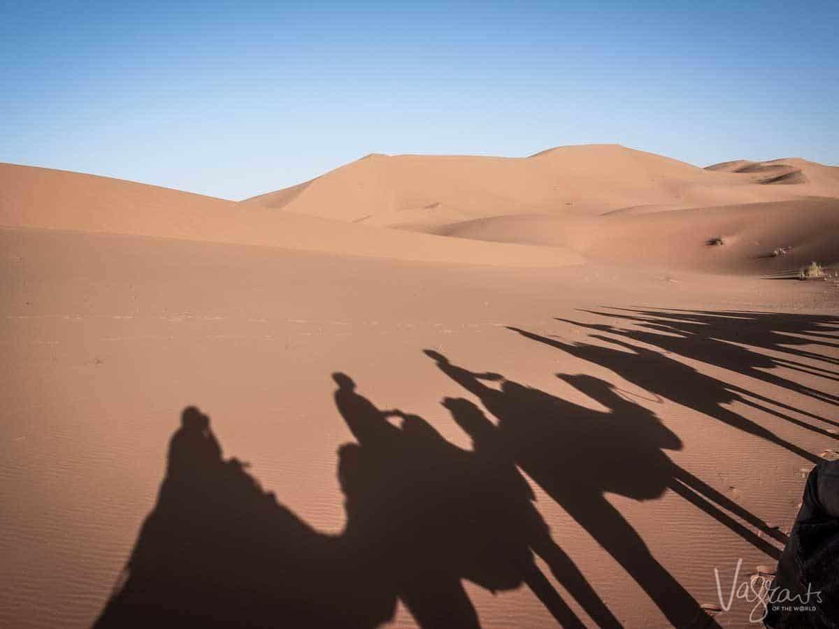 Sahara Desert Tours - Camel trekking in Morocco