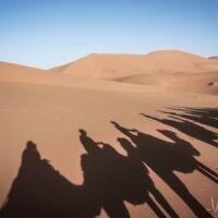 Camel Trekking in Morocco - Experience a Sahara Desert Tour