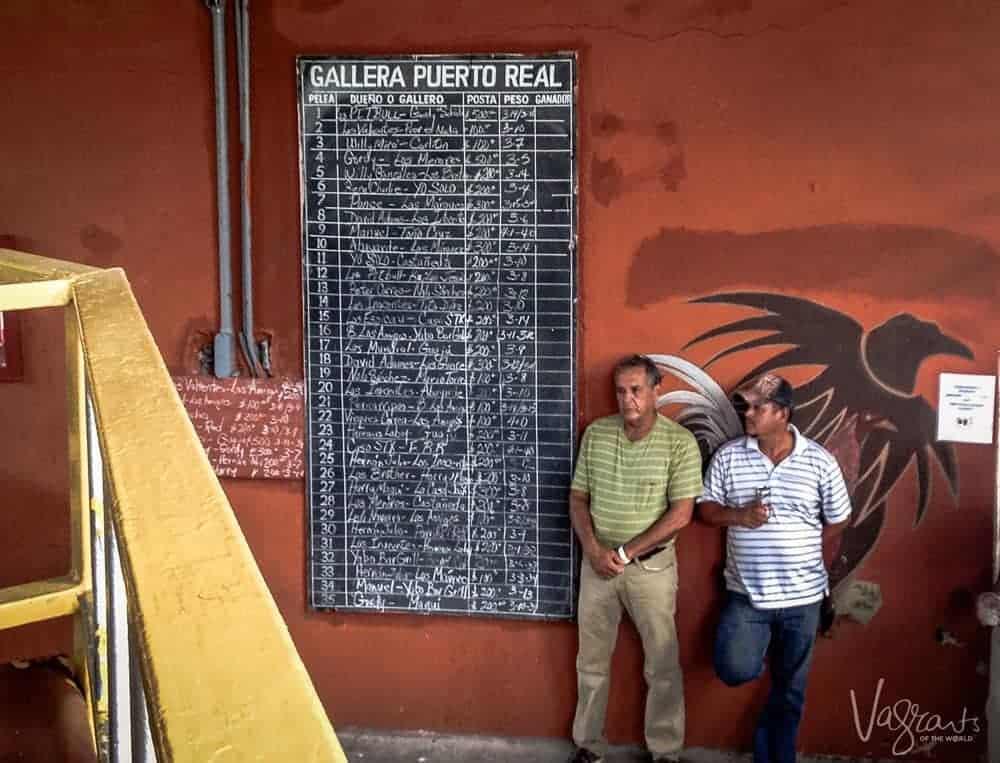 Cockfighting - Vieques Puerto Rico