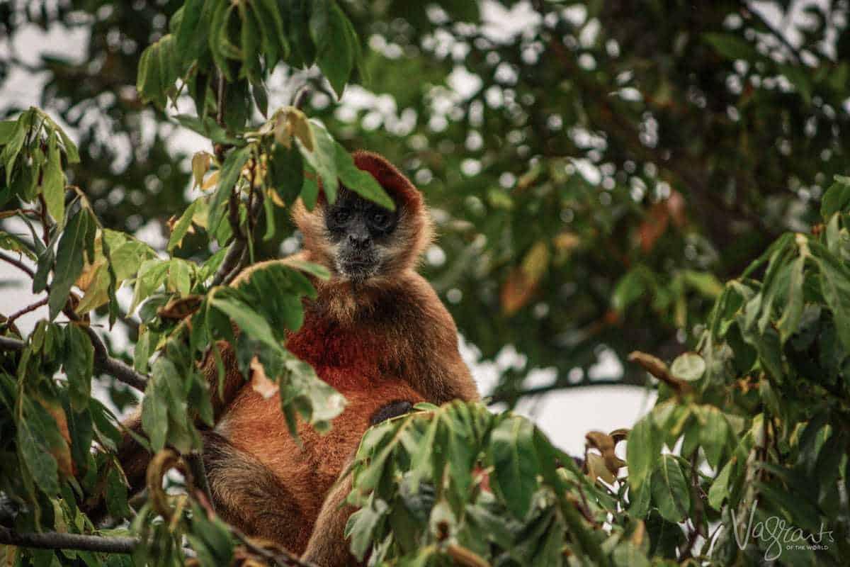 Las Isletas Nicaragua - Best things to do in Granada Nicaragua