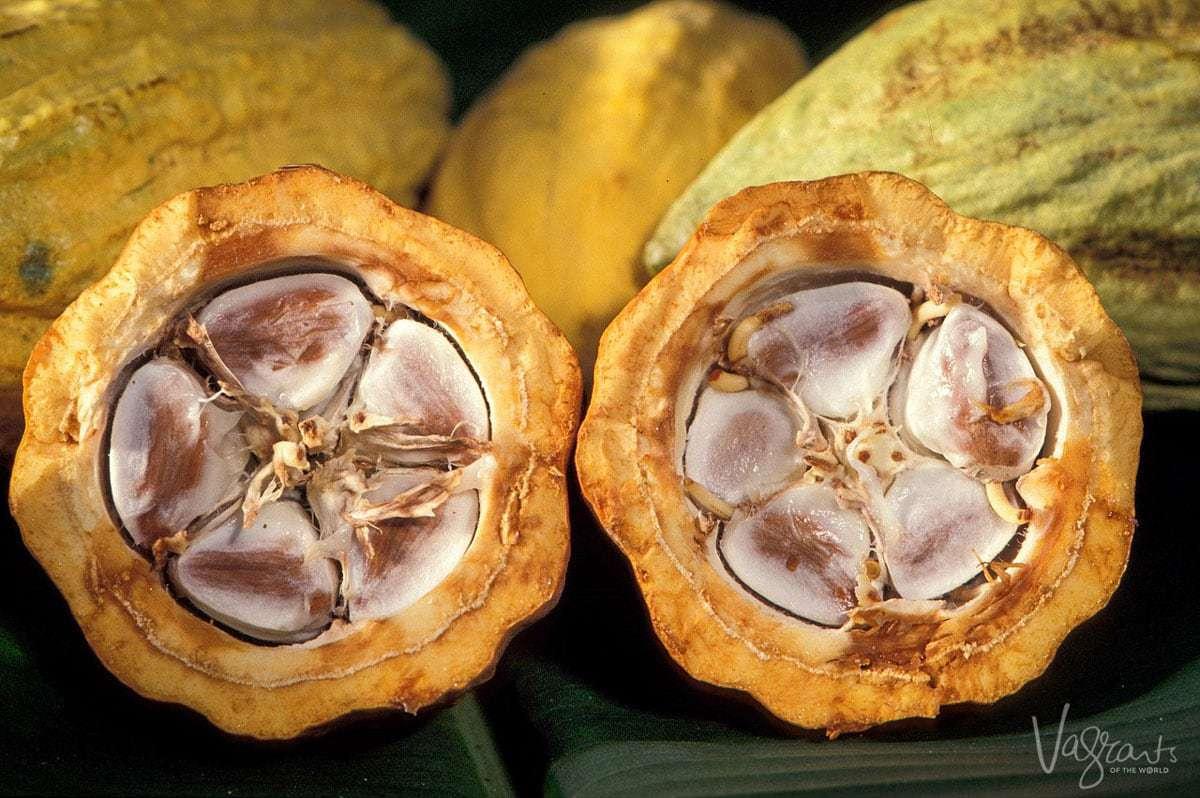 Cacao farming Matagalpa Nicaragua