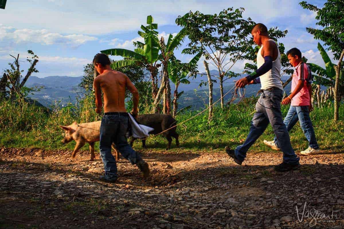 Matagalpa Nicaragua - Young Farmers with pigs