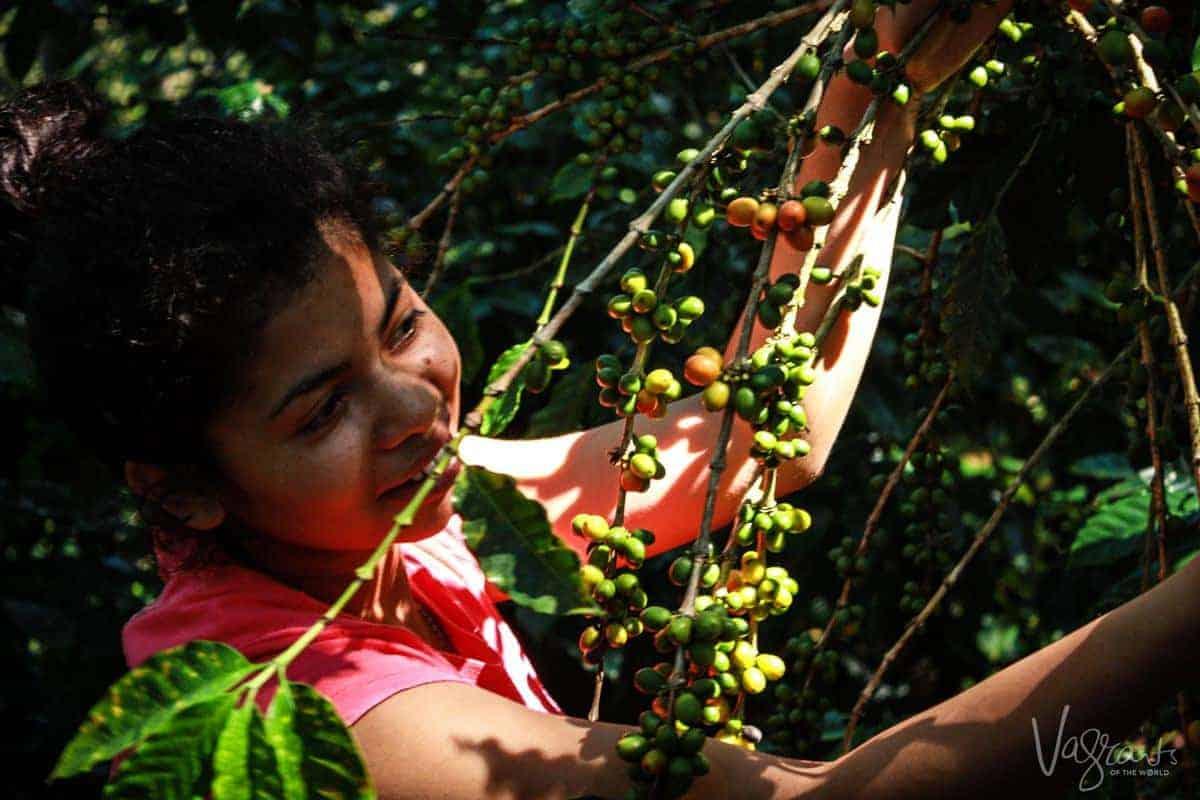 Coffe Farms in Matagalpa Nicaragua