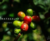 The Best of Matagalpa, Nicaragua's Coffee Country.