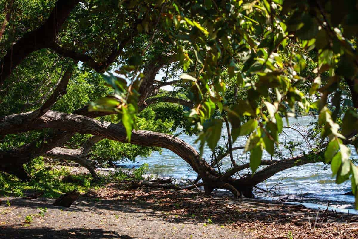 Charco Verde, Ometepe Island Nicaragua