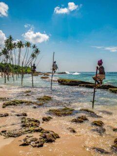 Pole fisherman in Sri Lanka