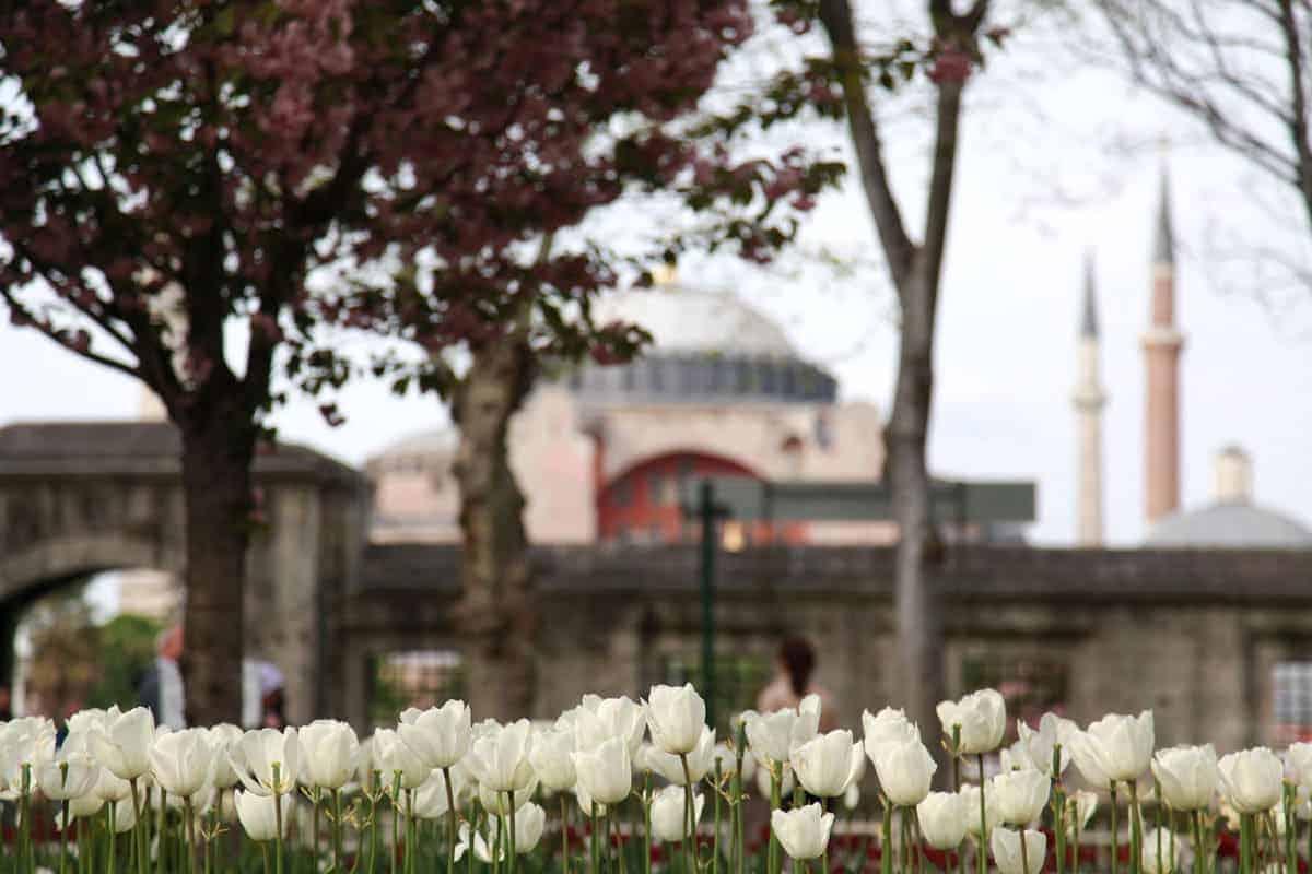 Spring - Tulip season in Istanbul