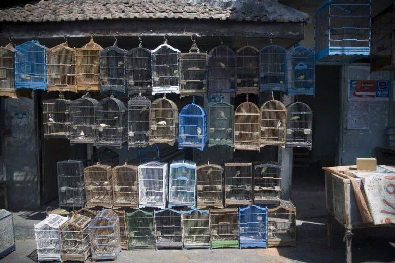 Bird Market Malang Indonesia