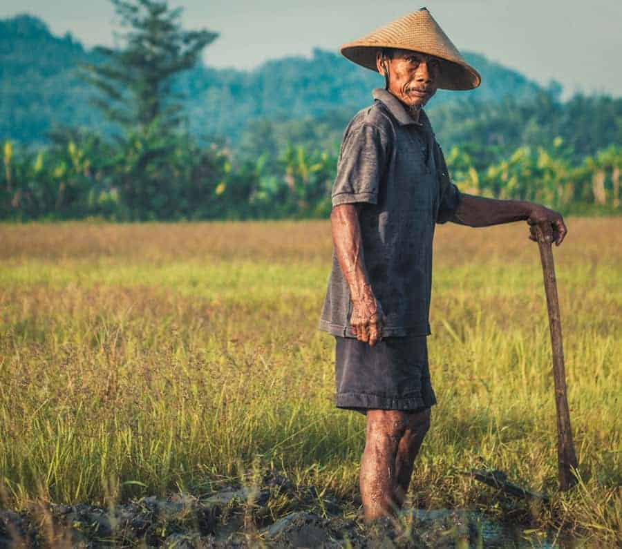 Farmer in Java Indonesia