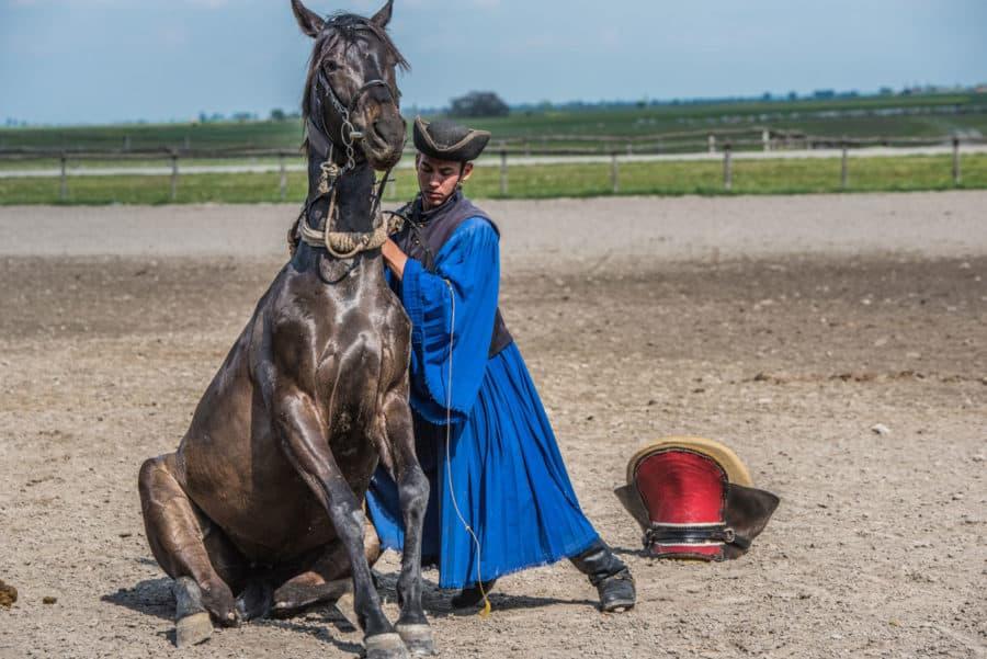 Badok Puszta Horse Farm Hungary Eastern Europe