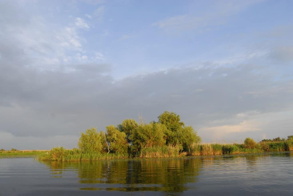 Danube Delta Rescue Dog Road trip