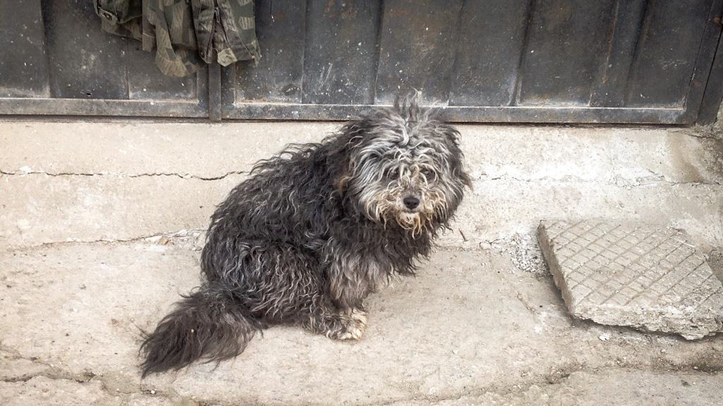 Rescue Dog Road Trip - Sprocket