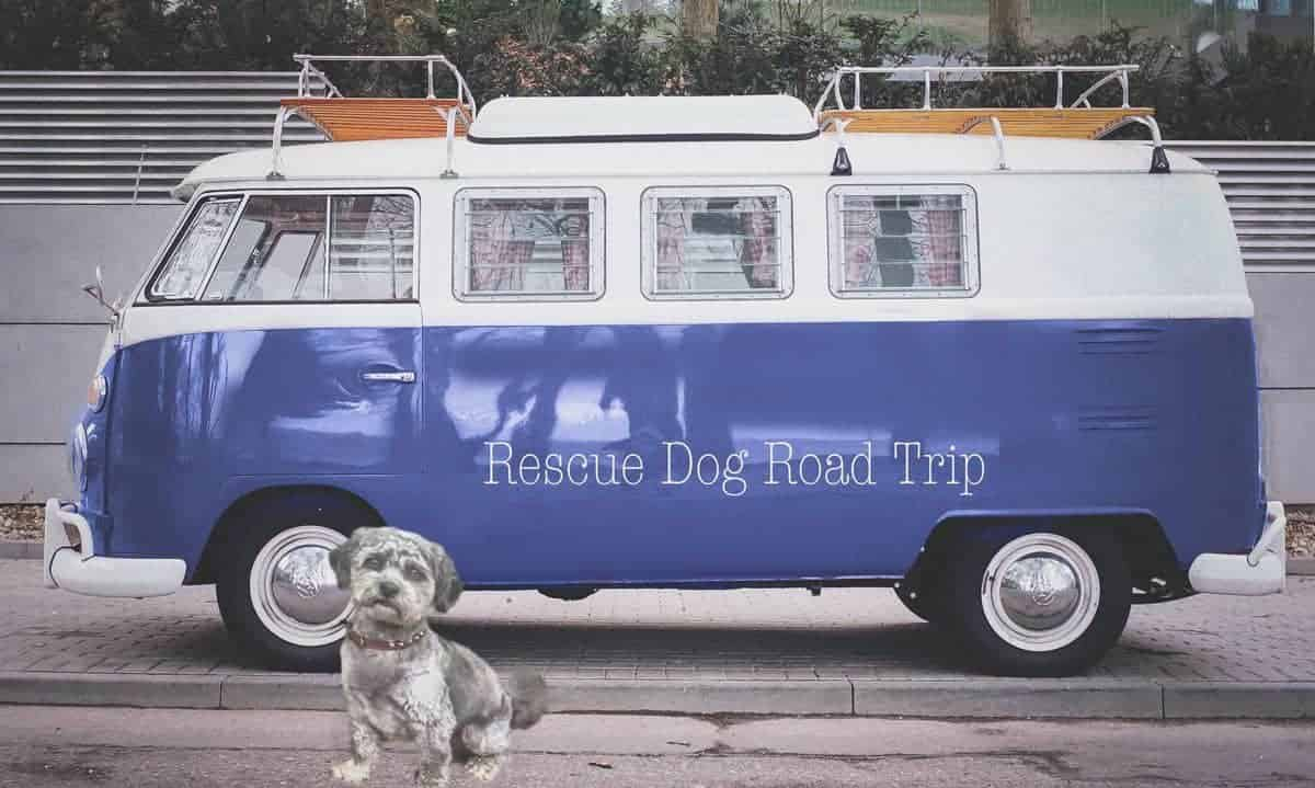 Rescue Dog Road Trip Sprockets Story