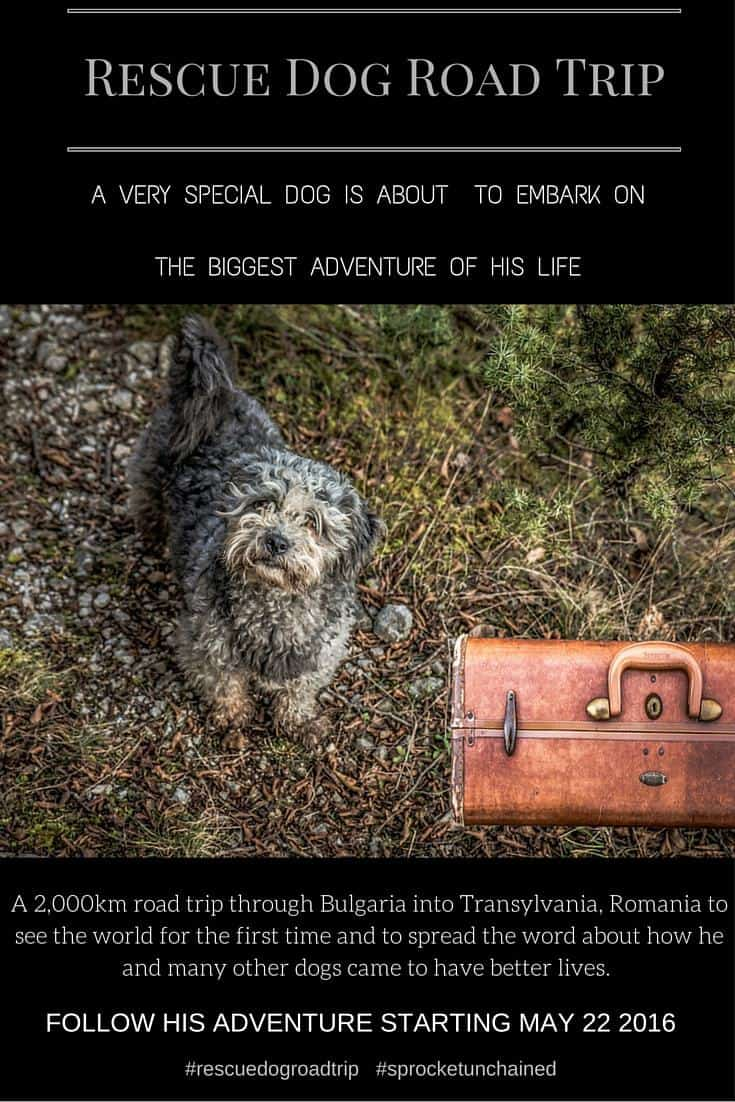 Rescue Dog Road Trip. One dogs epic adventure