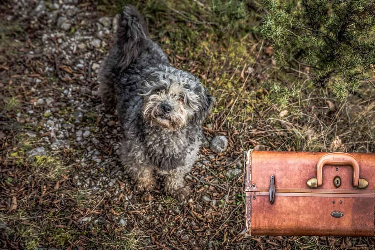 Rescue Dog Road Trip