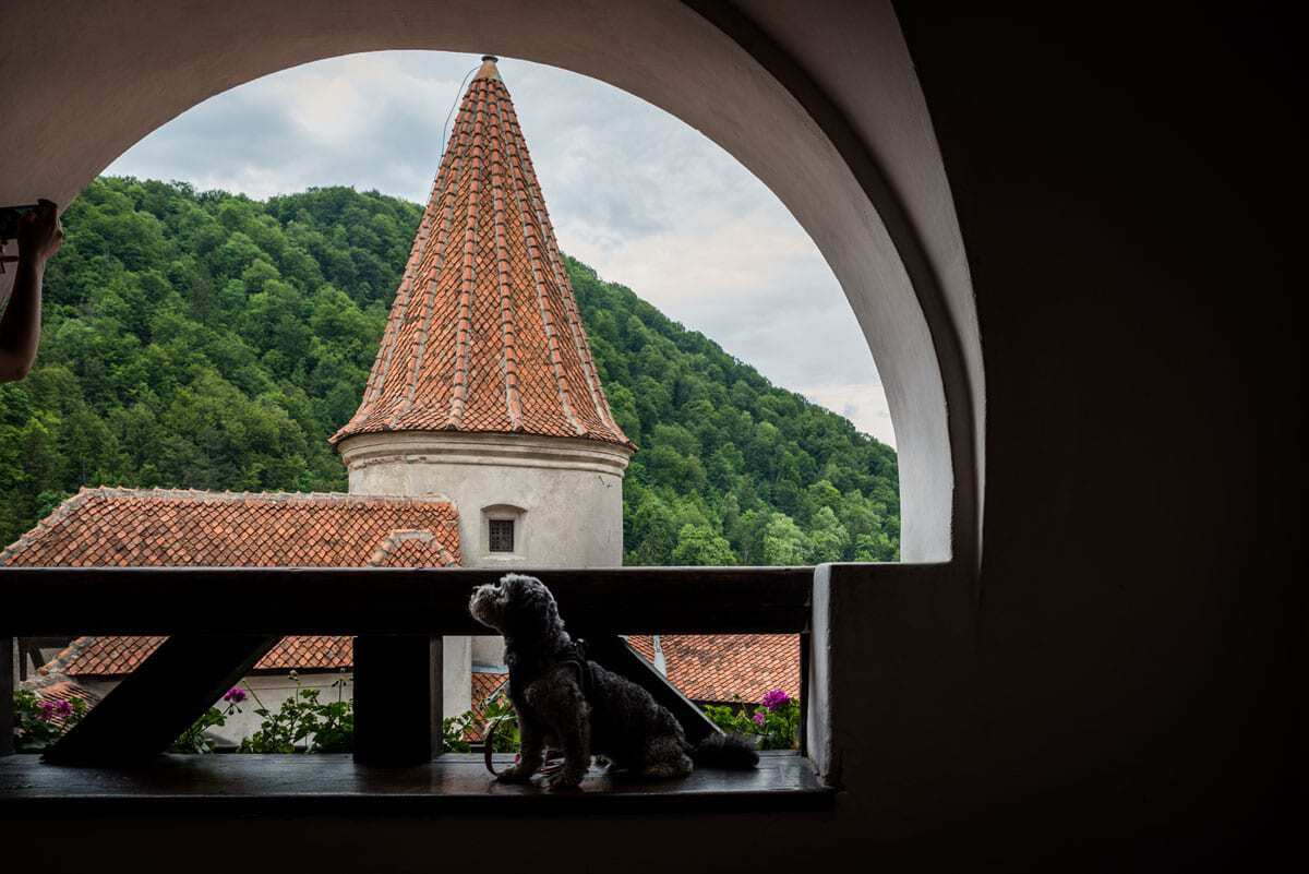 Our dog Sprocket enjoying the view from dracula's castle romania, best things to see and do in romania