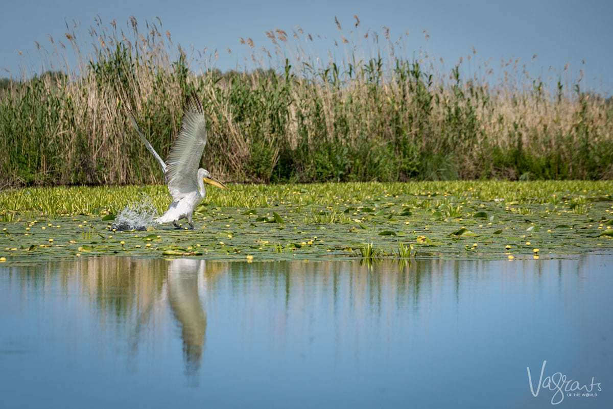 Into The Wild The Magnificent Danube Delta Romania