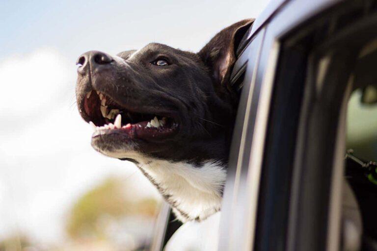 Pet Friendly Hotels in America's West