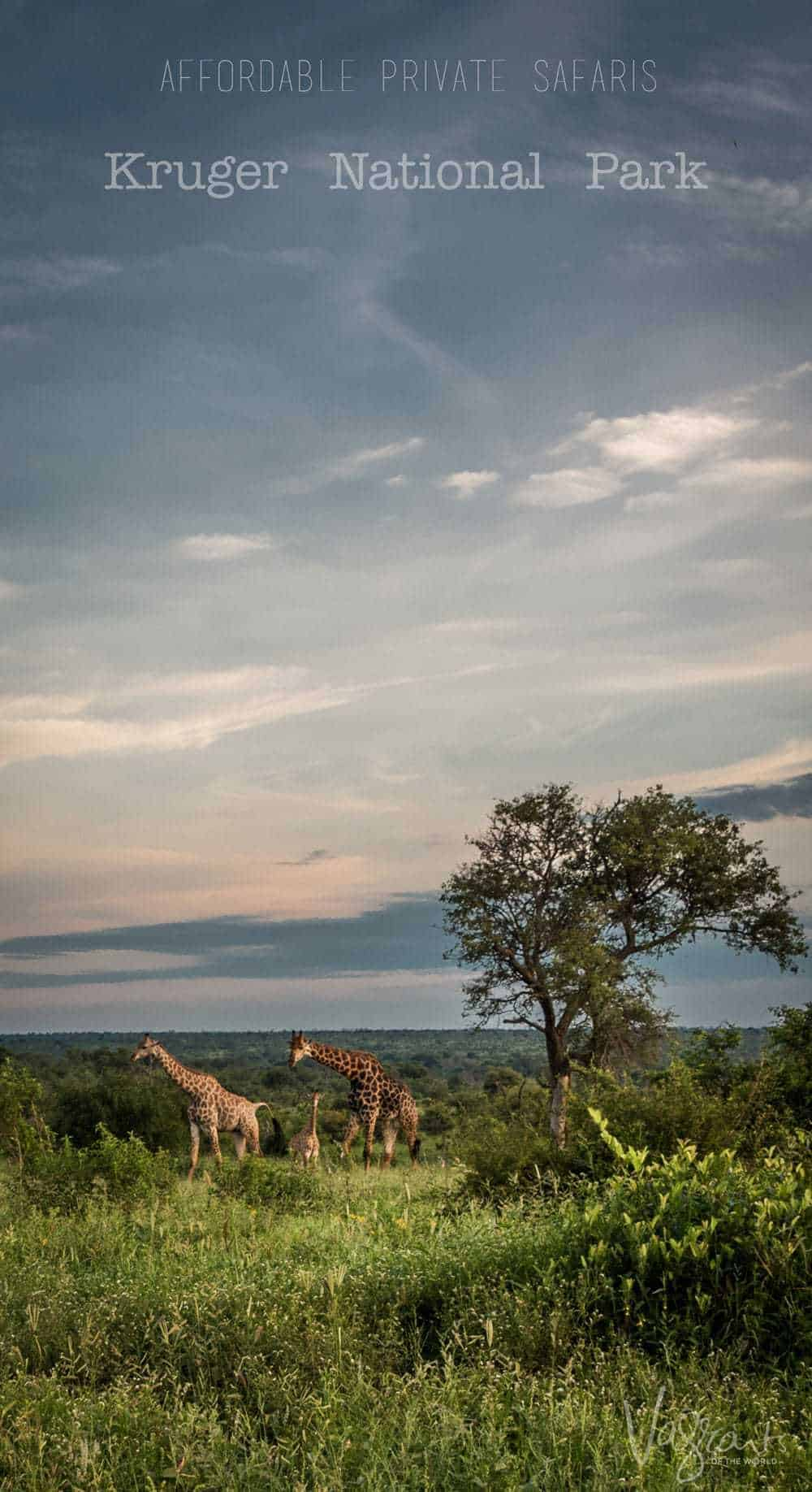 A full or half day private safari is a great way to experience Kruger National Park.