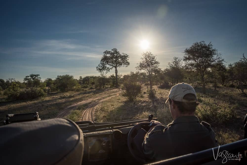 Game driving at nThambo Tree camp Safari Lodge