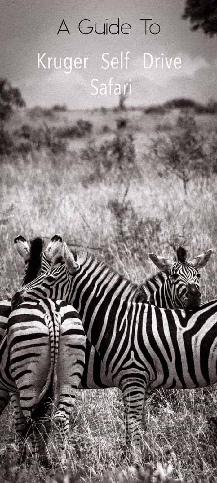 A first timers guide to Kruger National Park safari . All you need to know for self drive.