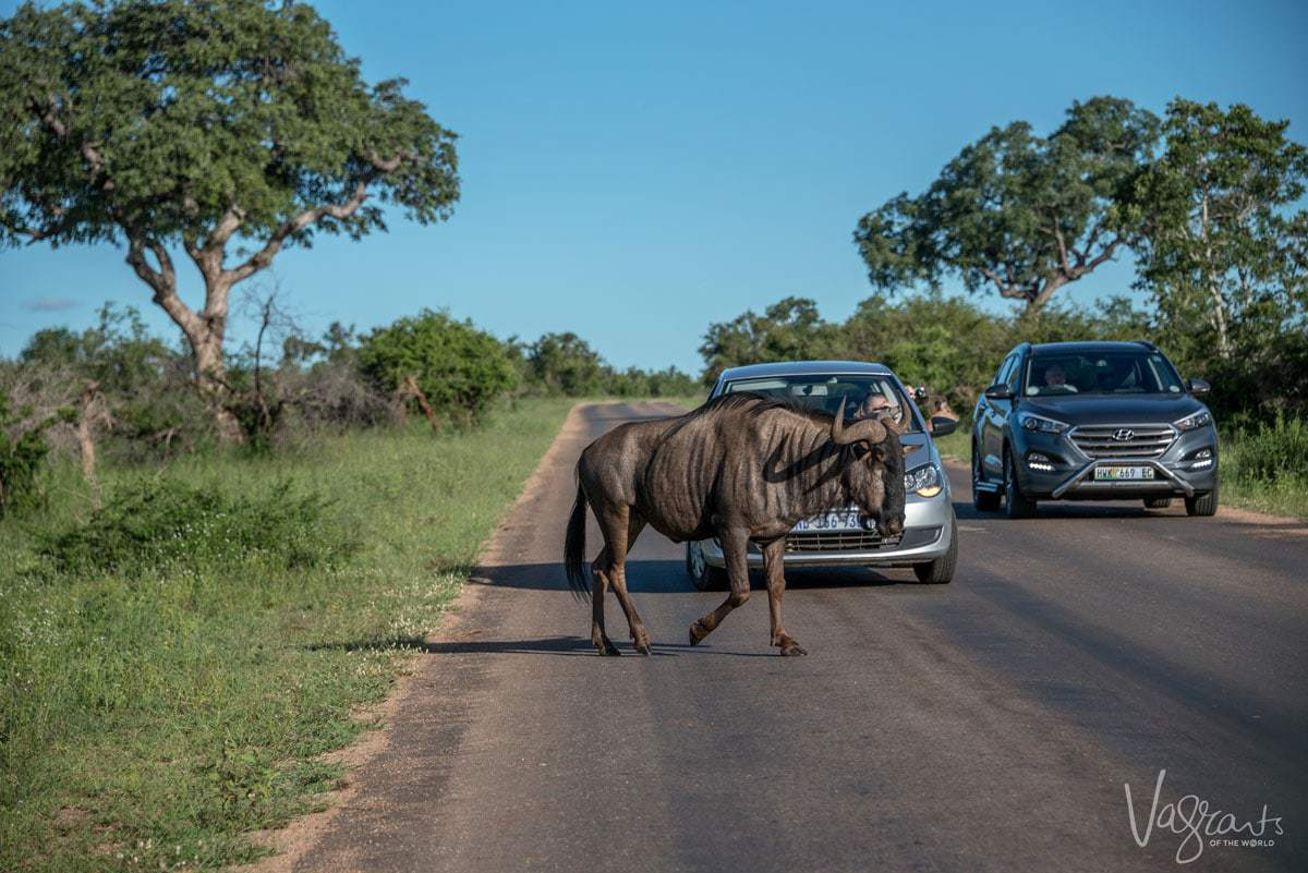 What kind of car is best for Kruger Self drive