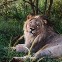 A Practical Guide to Kruger Self Drive Safari for First Timers
