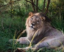 A Practical Guide to Kruger Self Drive Safari