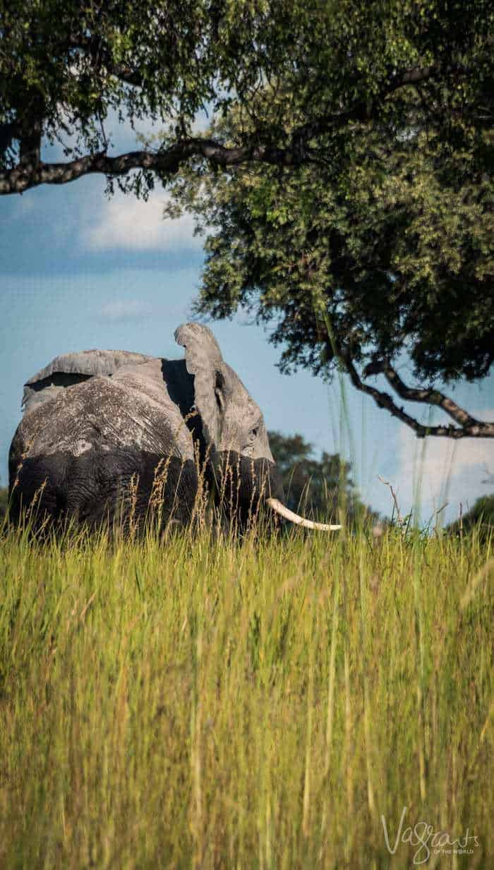 Okavango Delta Safari. Africa's greatest untouched wilderness.
