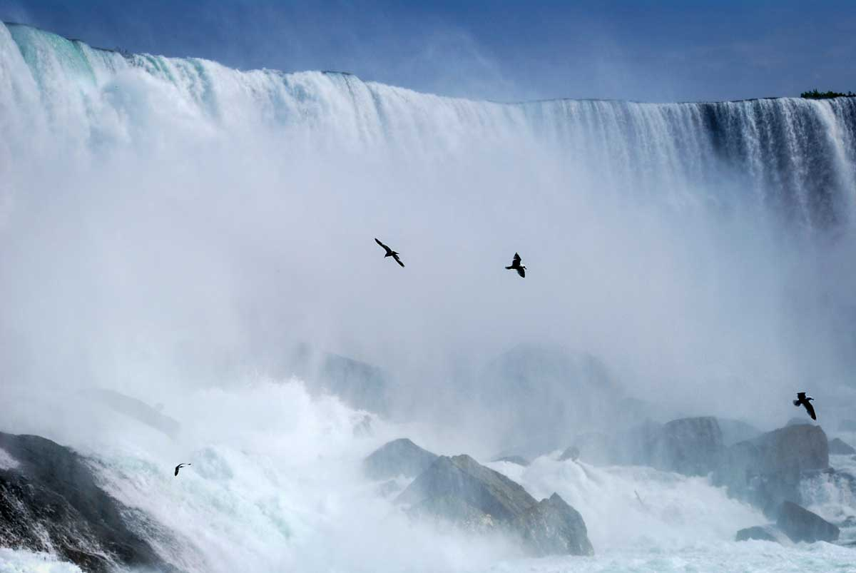 a view of Niagara Falls with birds flying across the face of the falls in the spray. A visit to Niagara falls is the best thing to see in Canada
