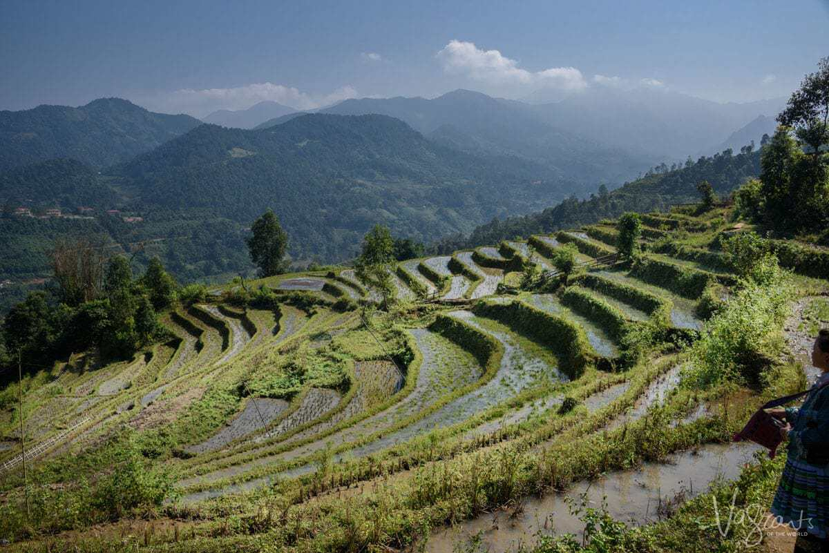 Trekking in Sapa - Rice fields