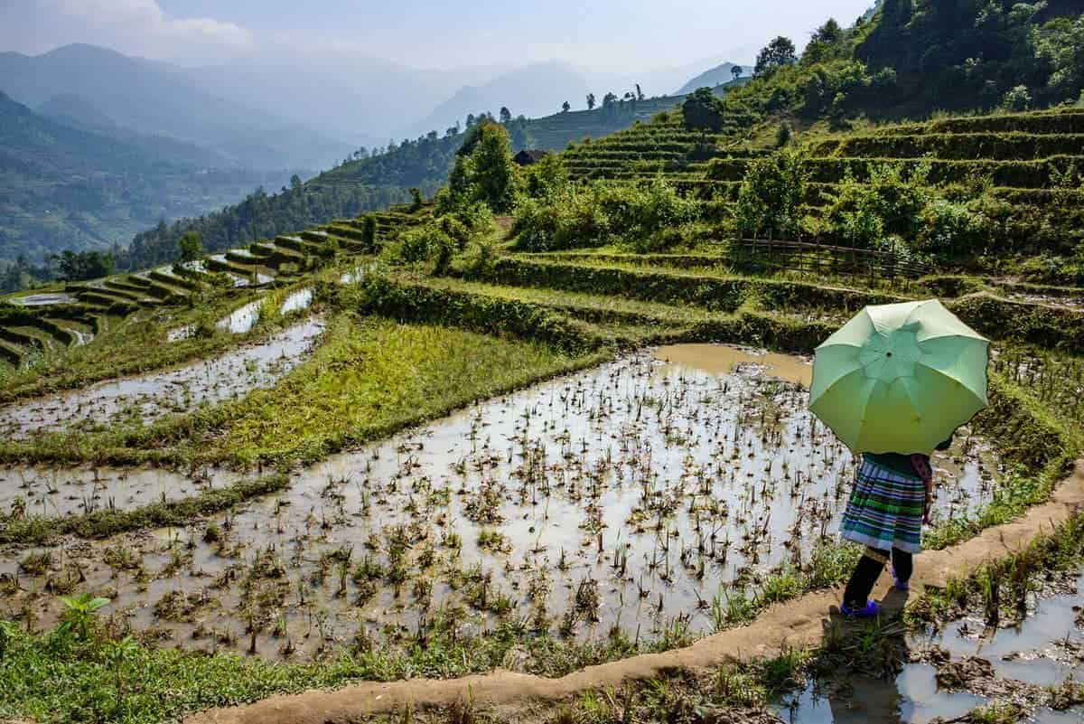 Local guide walks in rice terraces in Sapa