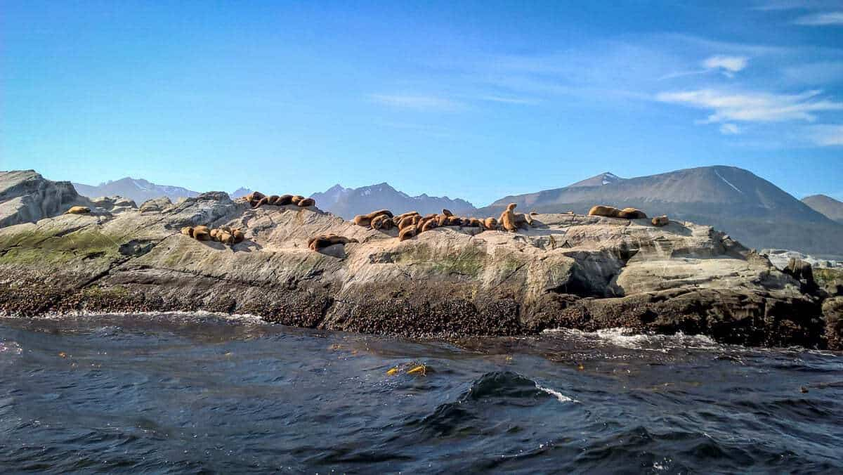 Seals on a rock on the southern coast of patagonia while sailing from Punta Arenas to Puerto Williams