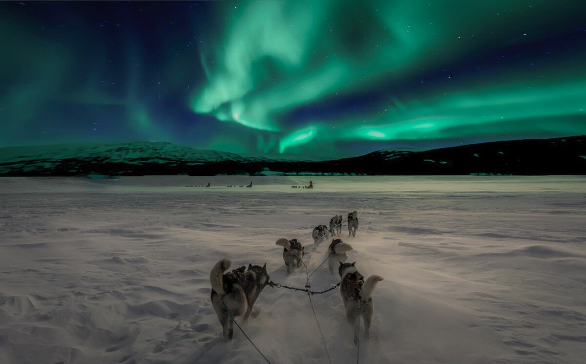 Dog sledding under the northern lights an activity on winter cruises in Norway