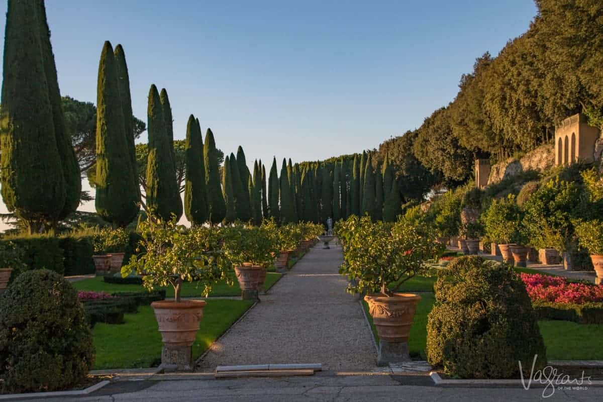 Pines and potted plants in Barberini Garden -Pontifical Villa Barberini.