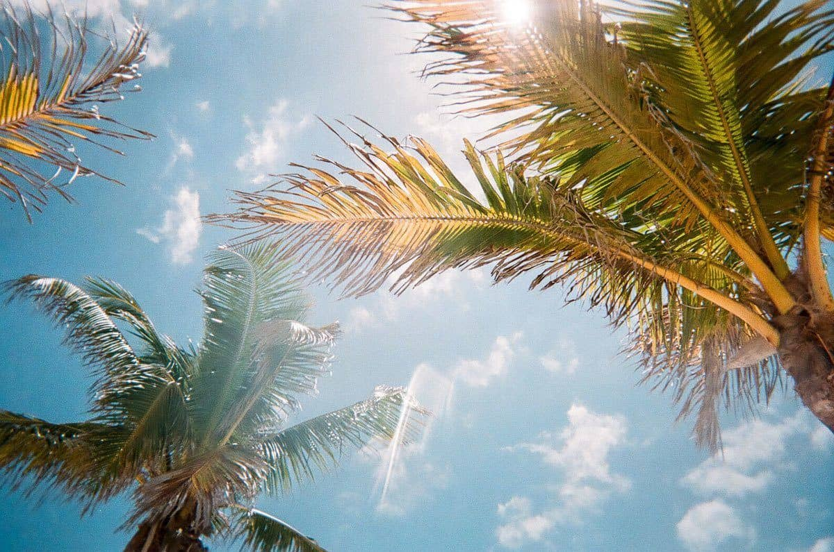 sun shining through palm tress on amelia island voted a top island in the world