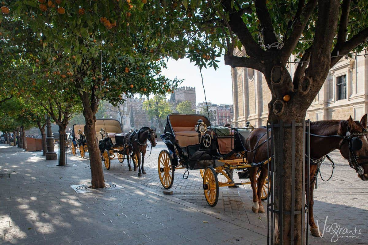 Horse and carriages parked under the shade of orange trees near the cathedral.