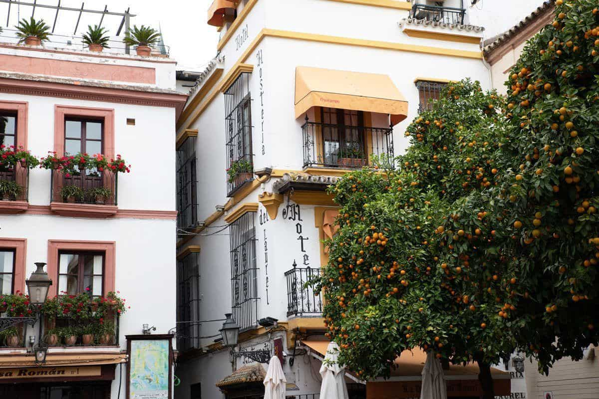 Street corner and tree heavily laden with oranges at Plaza de los Venerables.