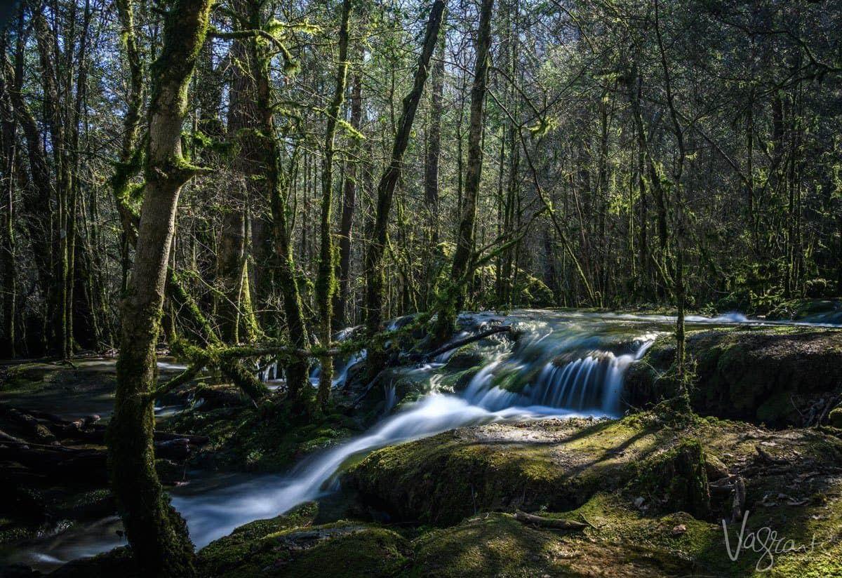 Creek running through a mossy forest.
