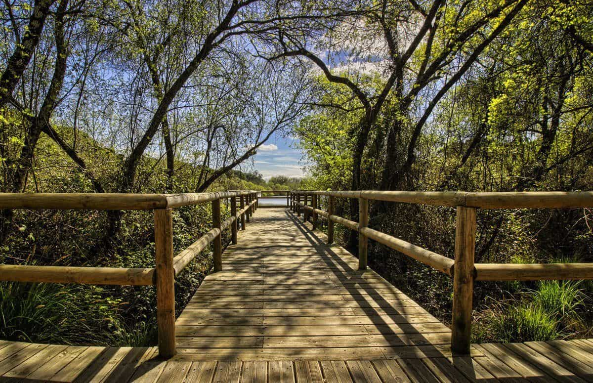 Wooden walkway through the trees. A great place to spend time on a free thing to do on your Day Trips from Seville Donana National Park