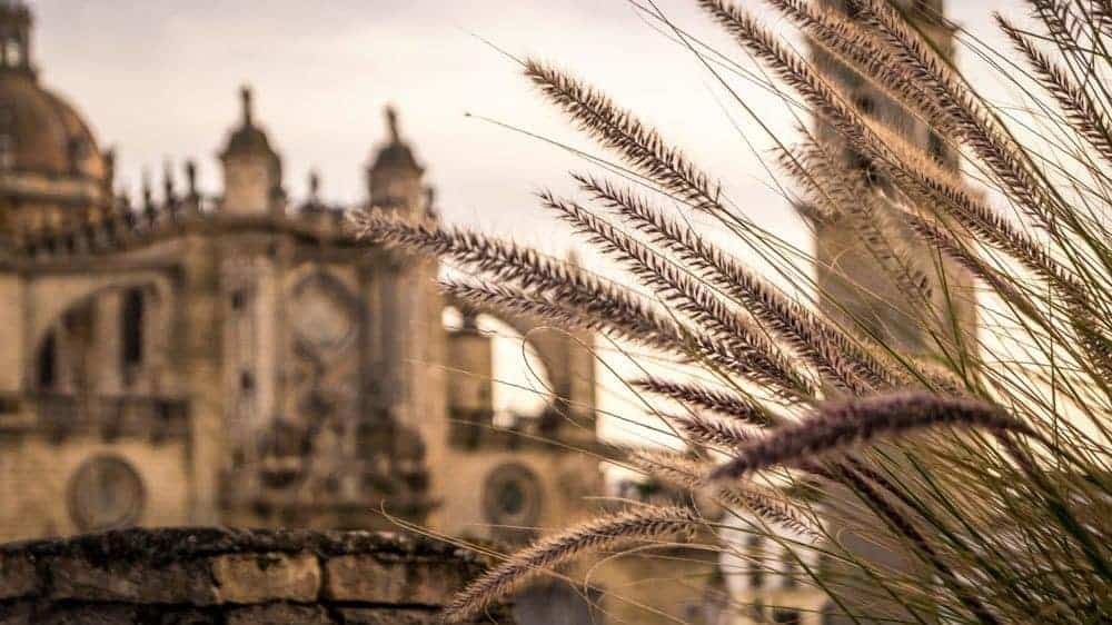 Day trips from Seville - Jerez