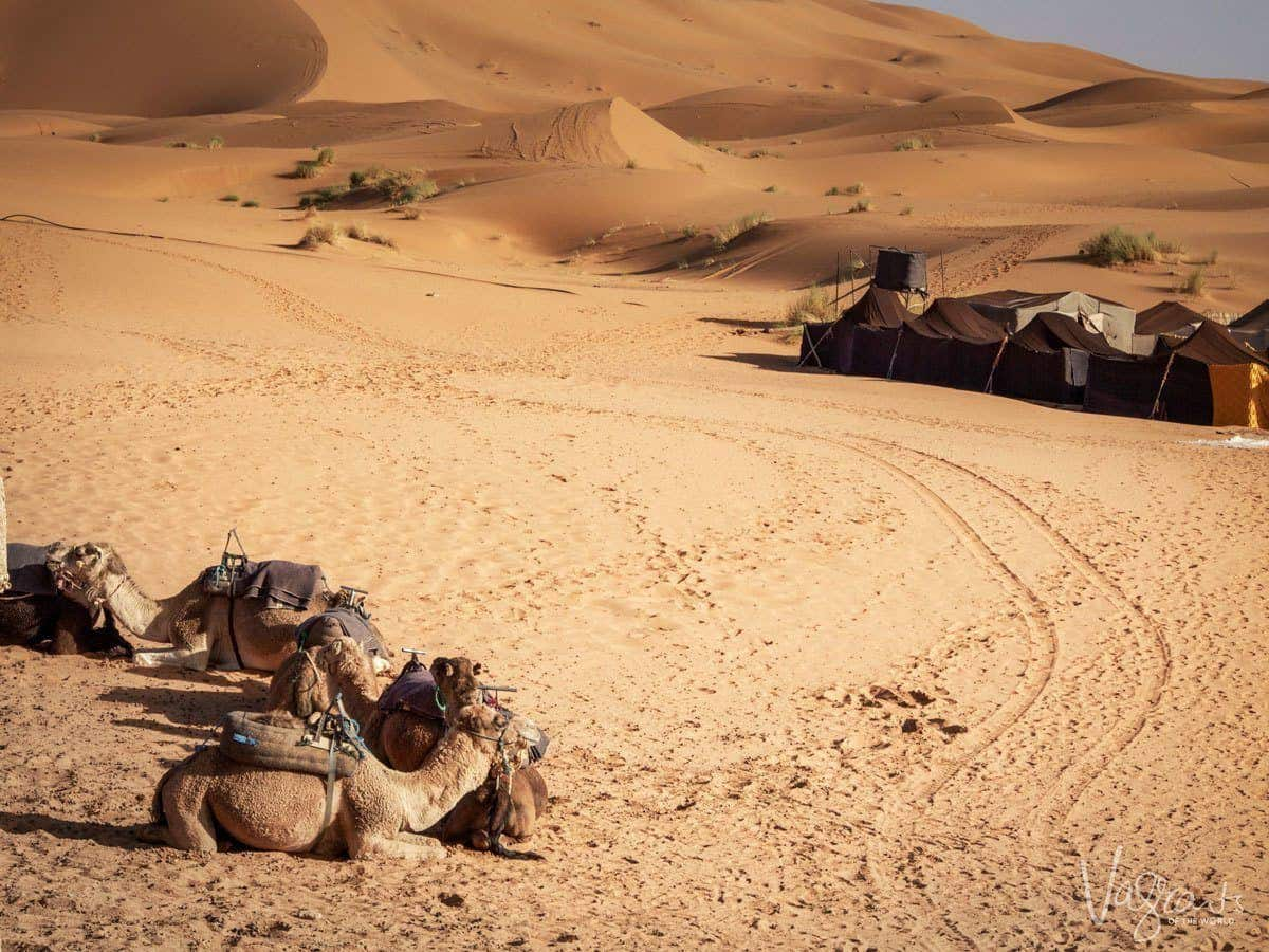Tents and sleeping camels in the sahara desert, Morocco.