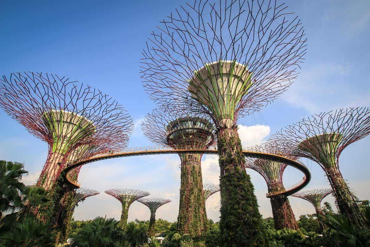 Super tree grove towers with metal branches spanning out,very sci fi, some of the best things to see and do in singapore are free, so you should include these in your Singapore itinerary.