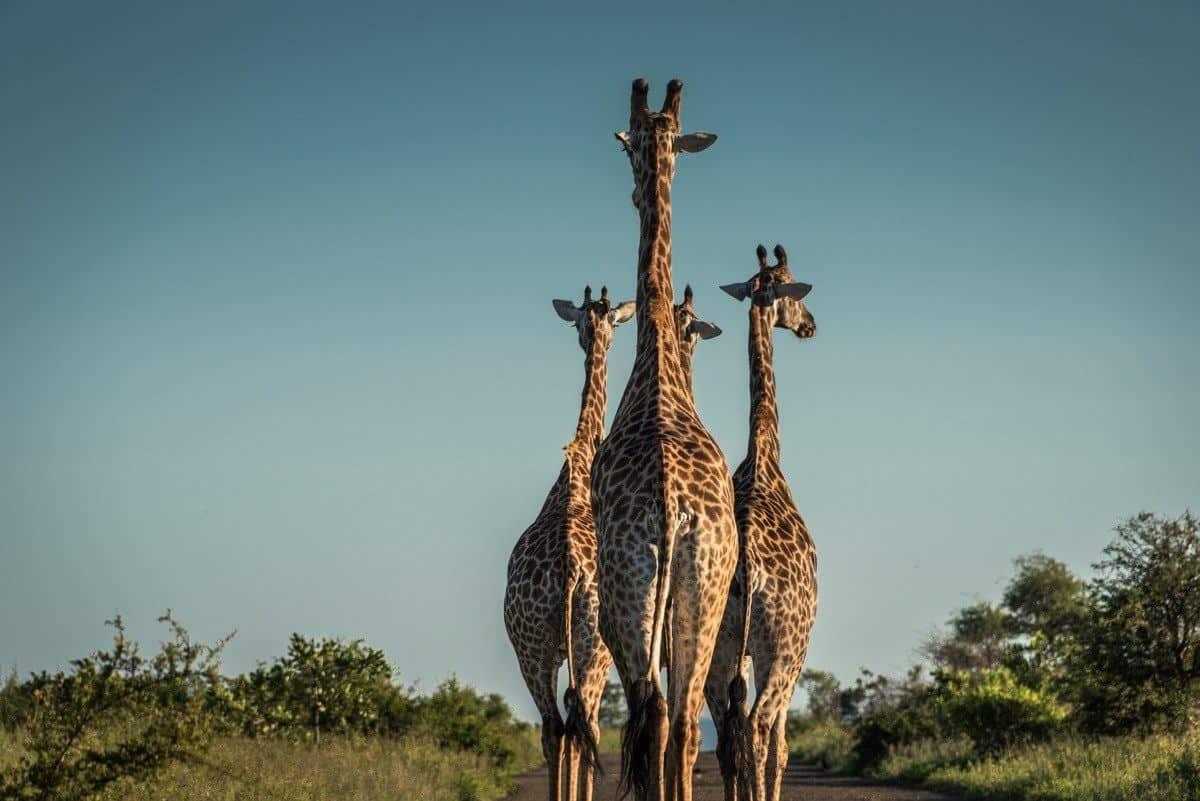 best wildlife and wilderness destinations