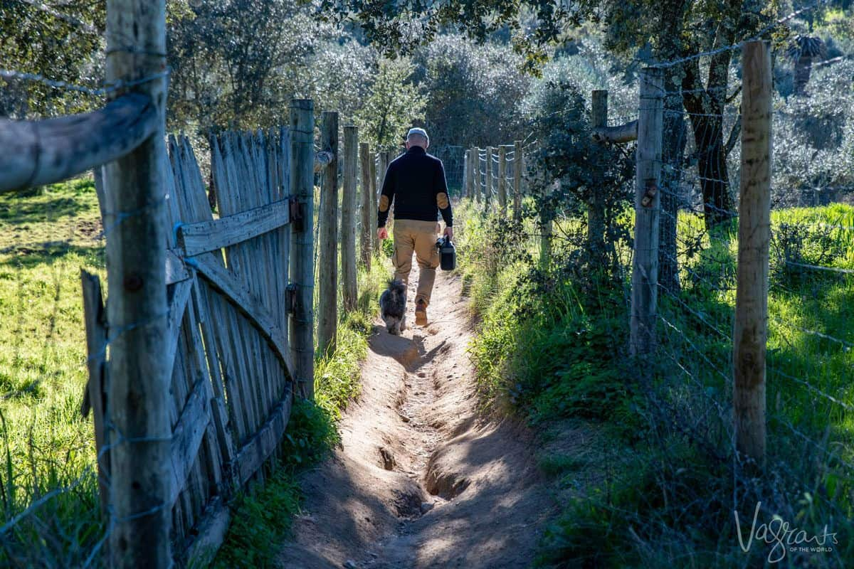 man and handsome dog walking in the countryside down between two fences on their way to Almendres Cromlech
