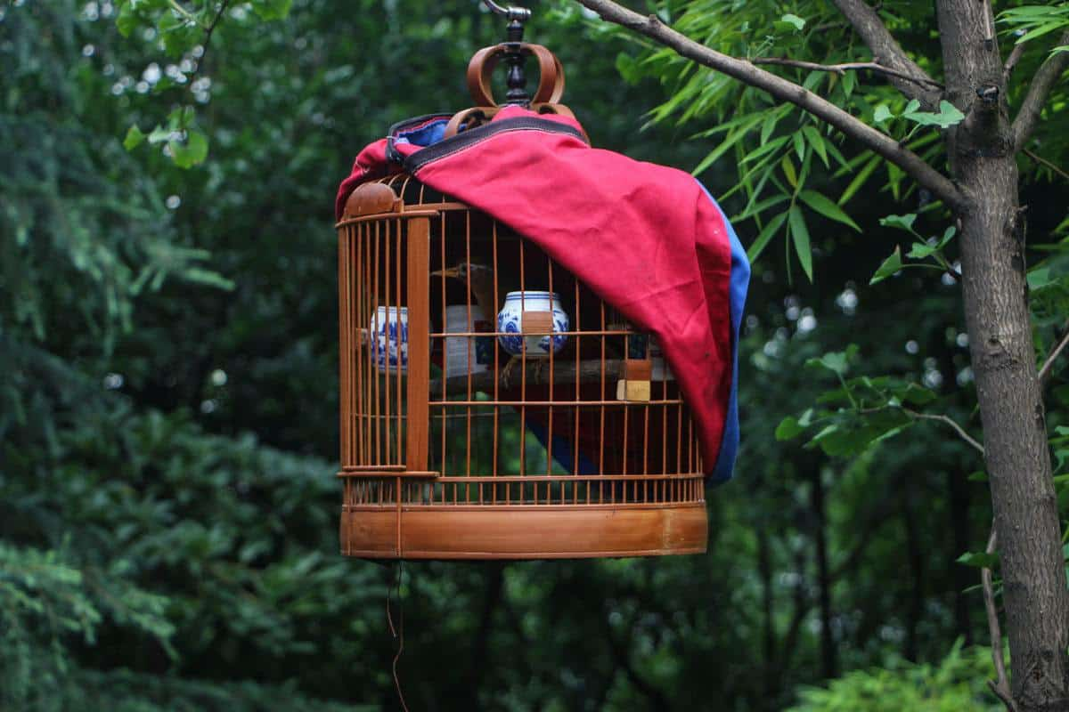 a brown birdcage with red cover. looking for unique things to do in ho chi minh city then visit the tao dan park bird cafe