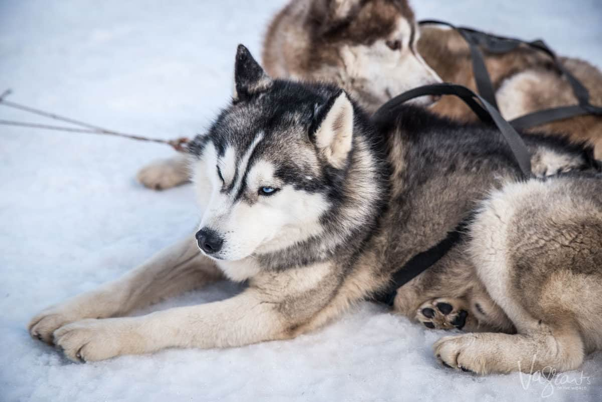 2 huskies lying in the snow, for some winter is the best time to visit Europe.