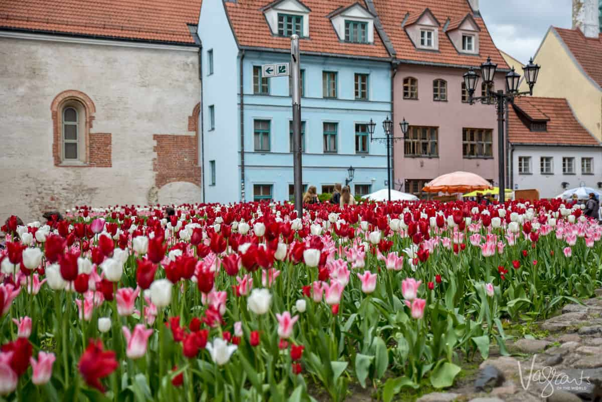 Europe in spring is beautiful time as flowers are all in bloom such as tulips in northern Europe
